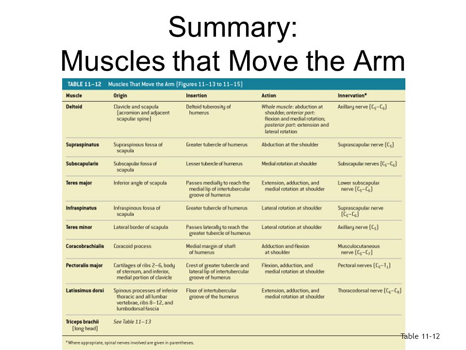 Summary: Muscles that Move the Arm