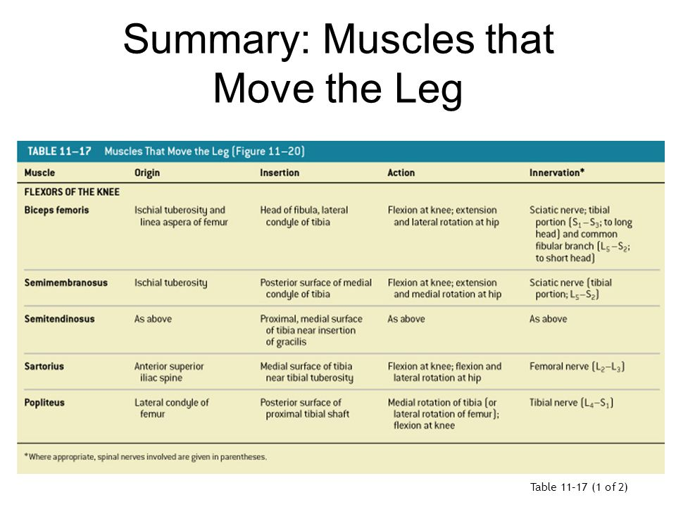 Summary: Muscles that Move the Leg