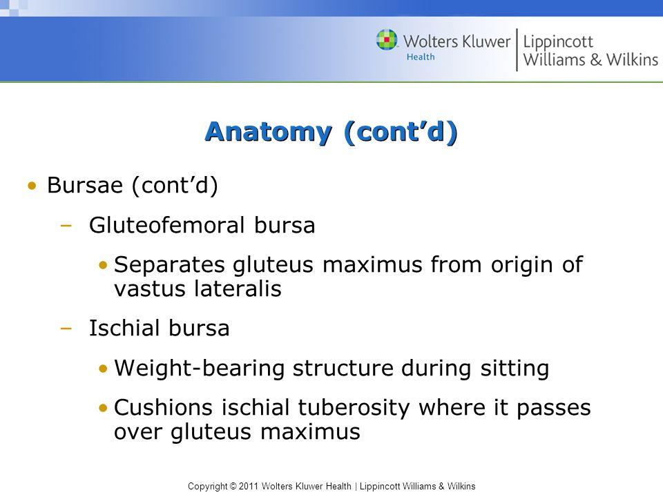 Anatomy (cont'd) Bursae (cont'd) Gluteofemoral bursa