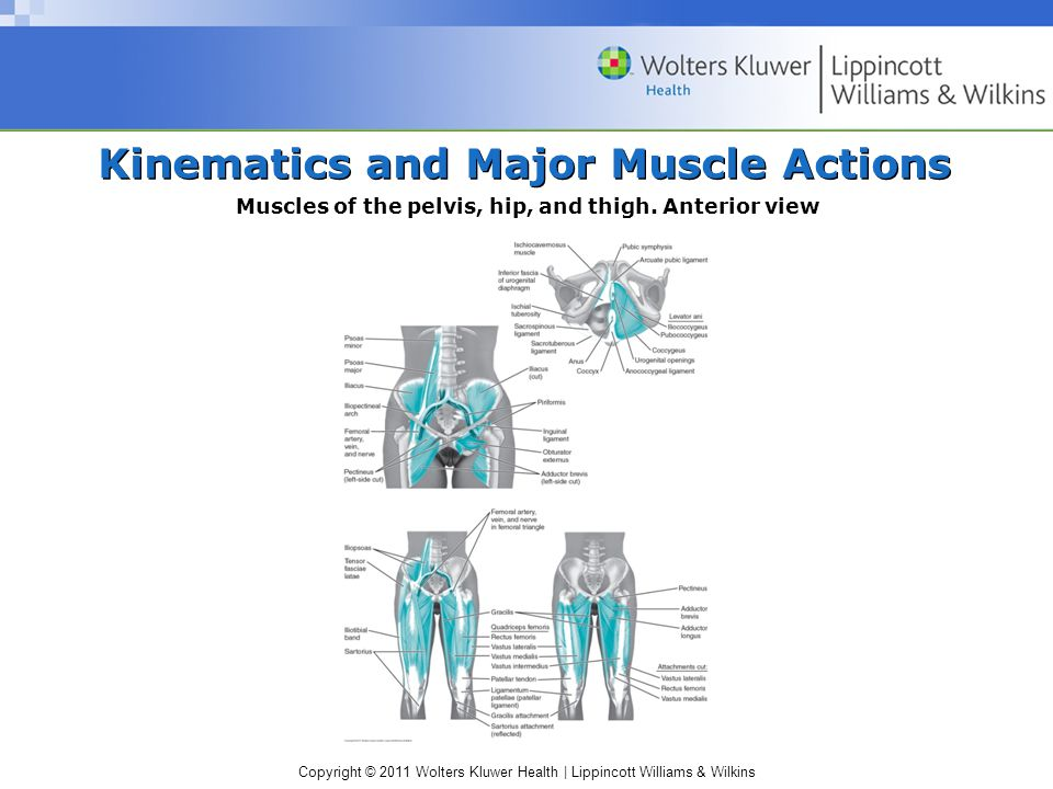 Kinematics and Major Muscle Actions