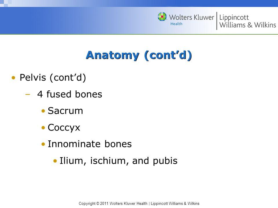 Anatomy (cont'd) Pelvis (cont'd) 4 fused bones Sacrum Coccyx