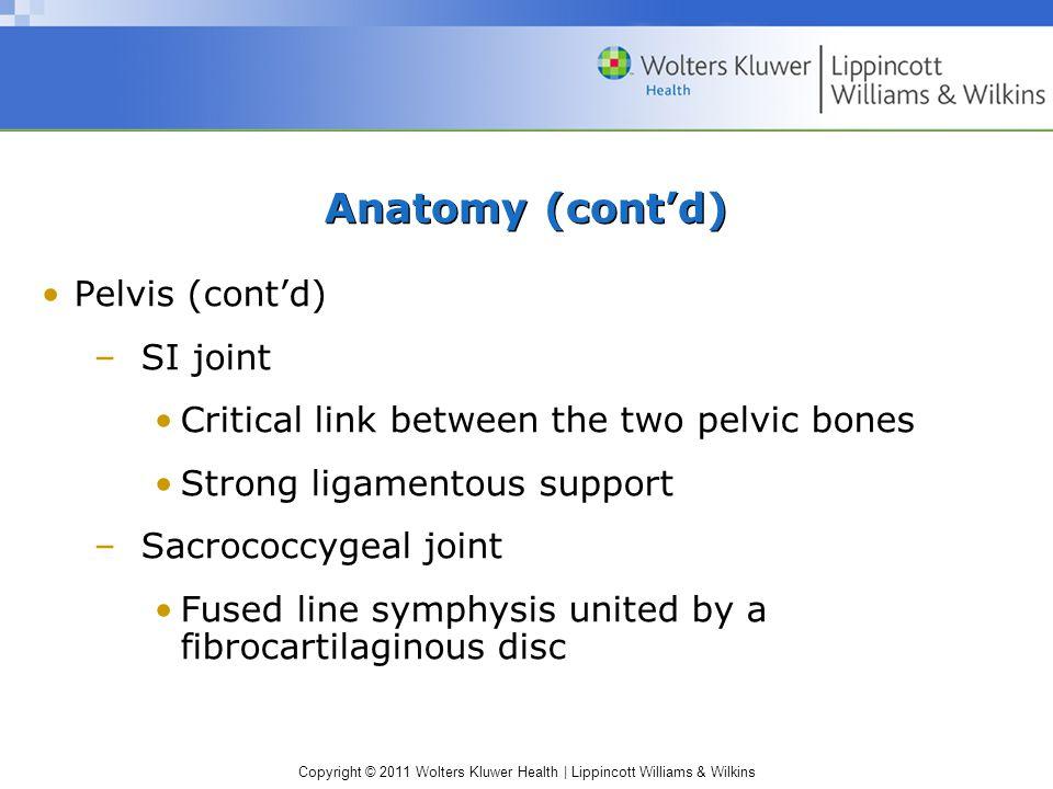Anatomy (cont'd) Pelvis (cont'd) SI joint