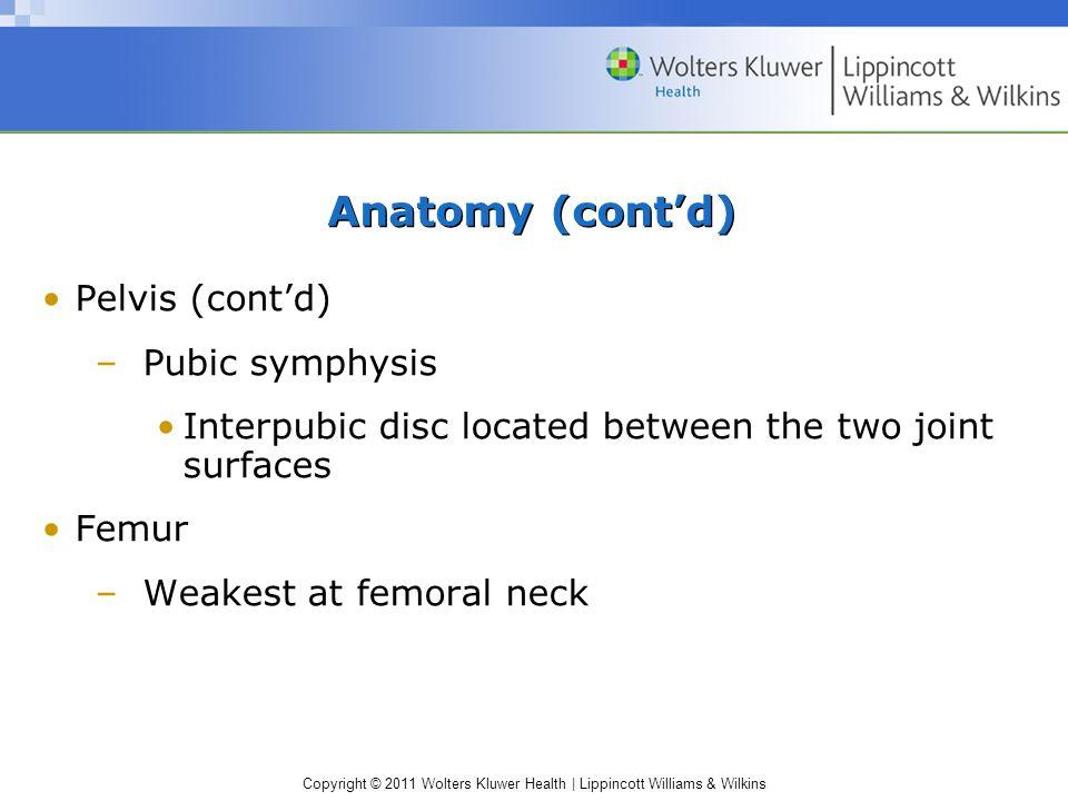 Anatomy (cont'd) Pelvis (cont'd) Pubic symphysis
