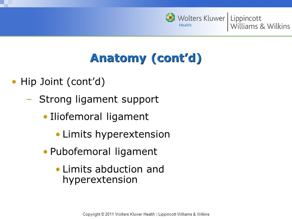 Anatomy (cont'd) Hip Joint (cont'd) Strong ligament support