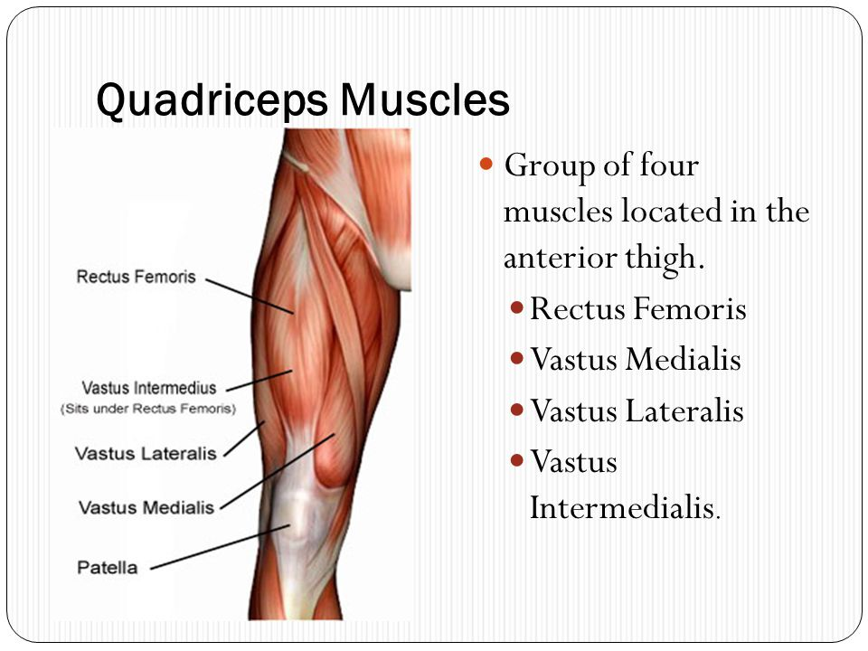 Quadriceps Muscles Group of four muscles located in the anterior thigh. Rectus Femoris. Vastus Medialis.