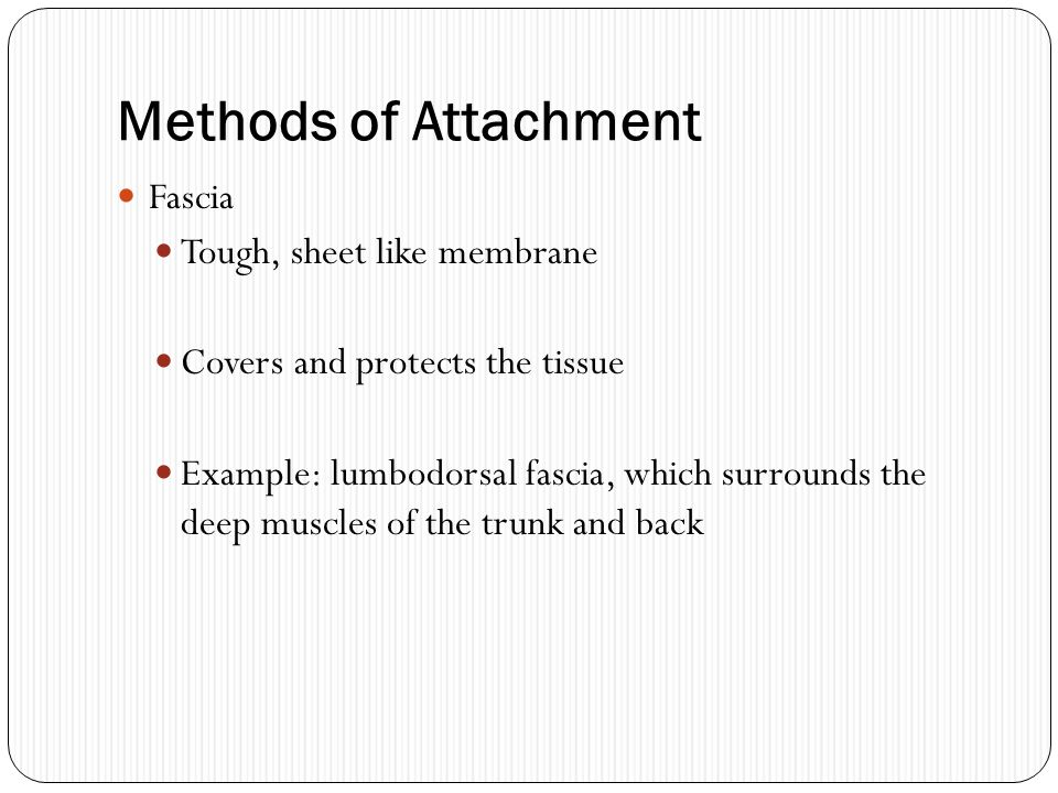 Methods of Attachment Fascia Tough, sheet like membrane