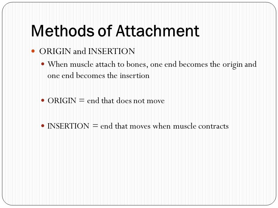 Methods of Attachment ORIGIN and INSERTION