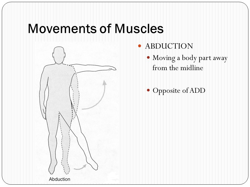 Movements of Muscles ABDUCTION