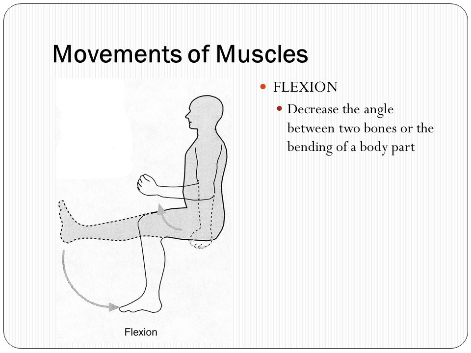 Movements of Muscles FLEXION