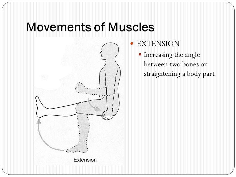Movements of Muscles EXTENSION
