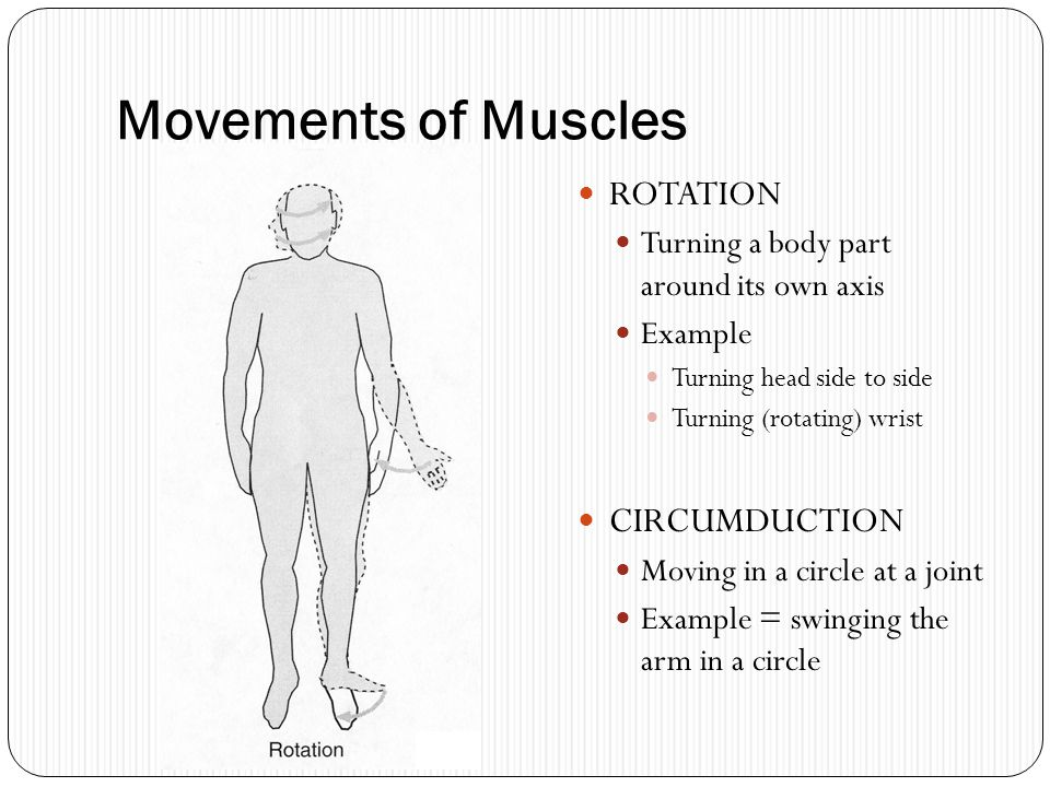 Movements of Muscles ROTATION CIRCUMDUCTION