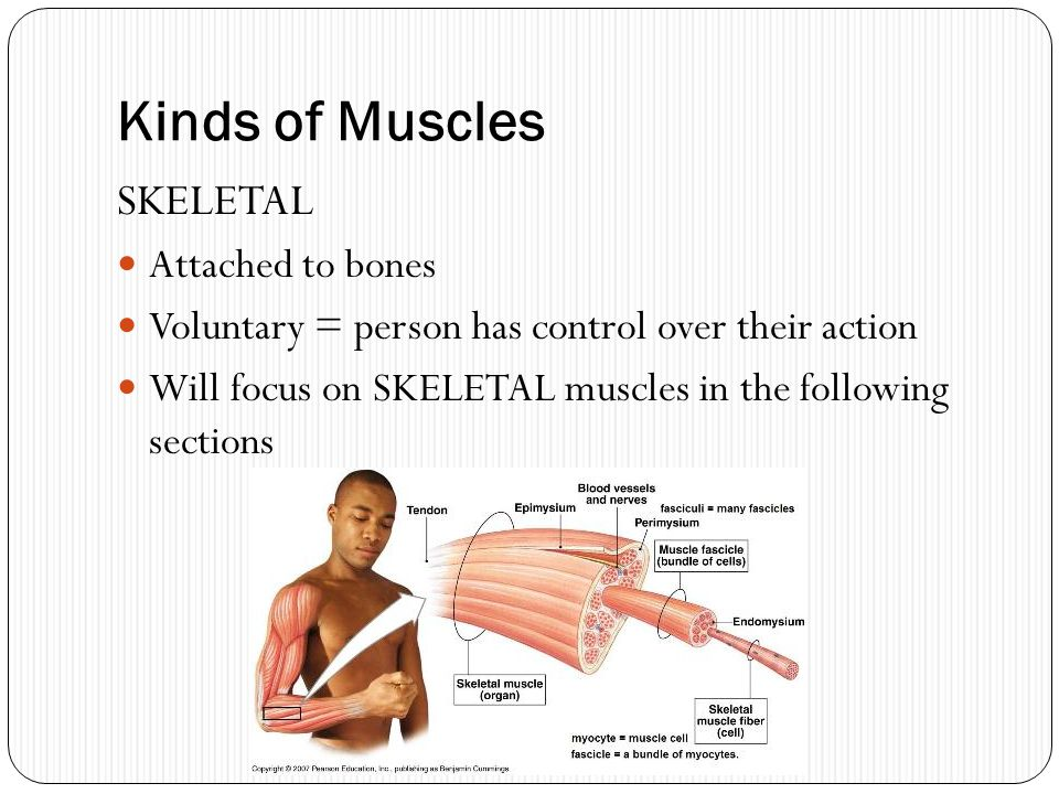 Kinds of Muscles SKELETAL Attached to bones