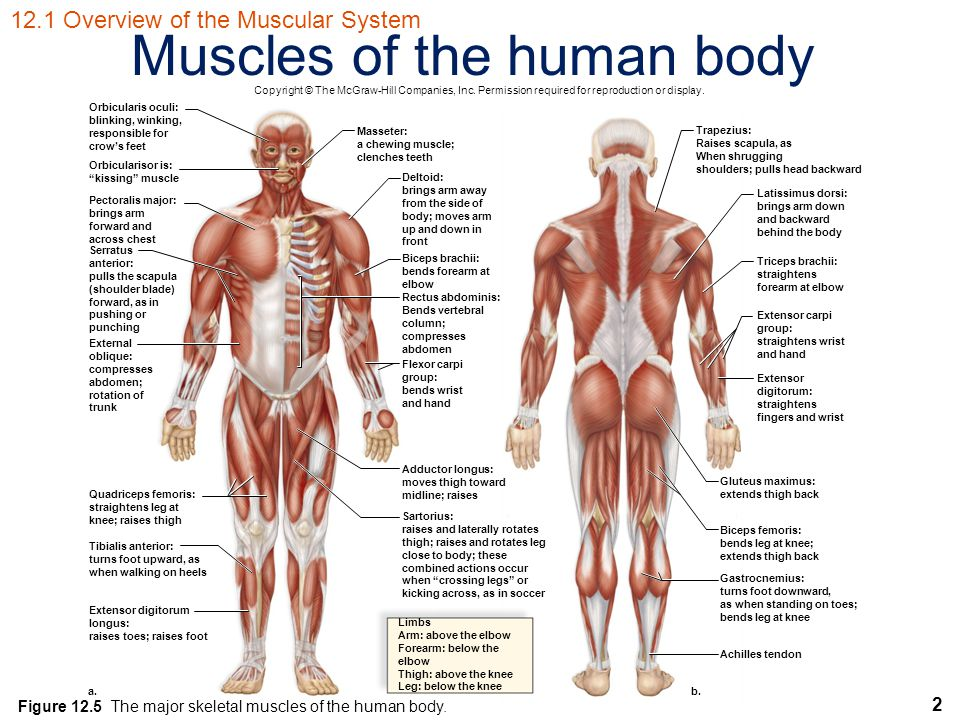 Human Biology Sylvia S Mader Michael Windelspecht Ppt Video