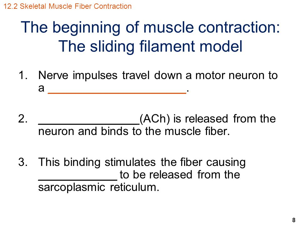 The beginning of muscle contraction: The sliding filament model