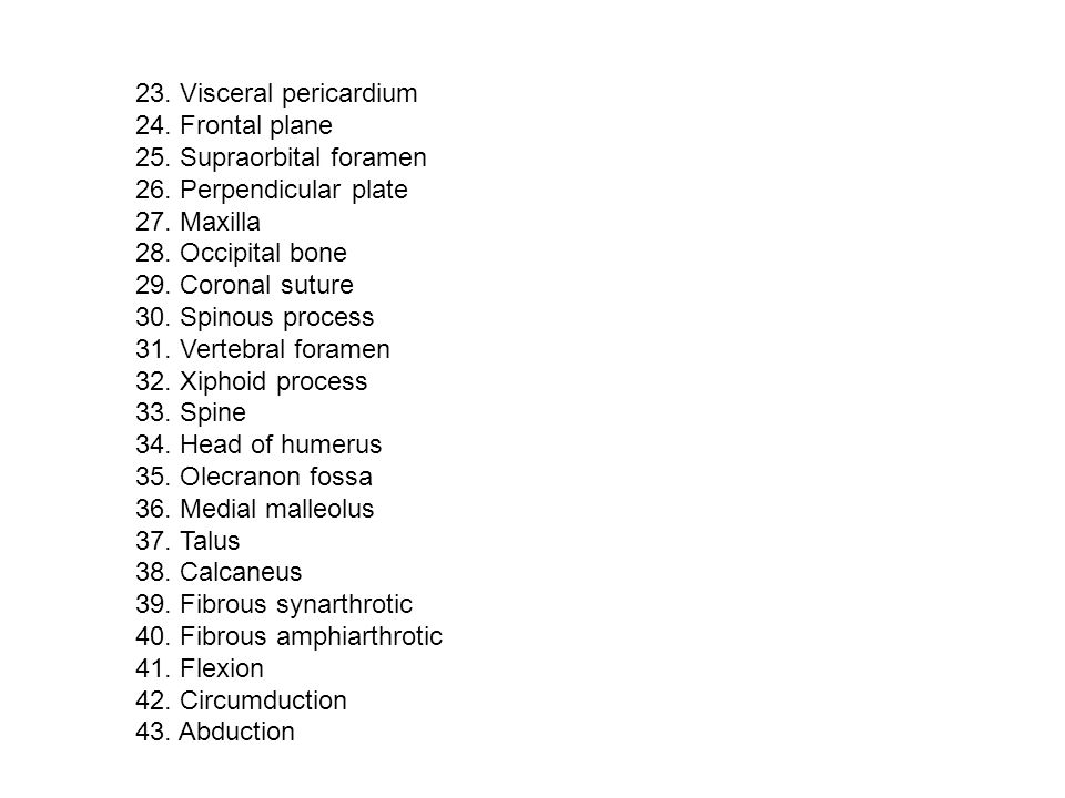 23. Visceral pericardium 24. Frontal plane. 25. Supraorbital foramen. 26. Perpendicular plate. 27. Maxilla.