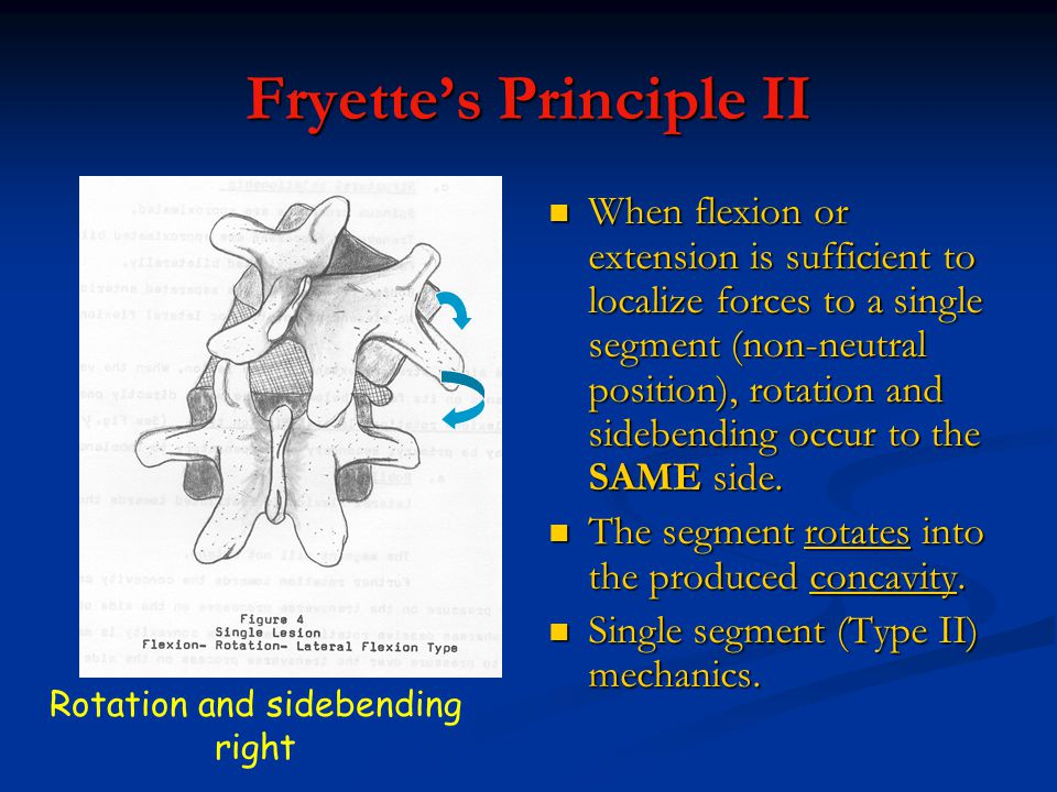 Fryette's Principle II