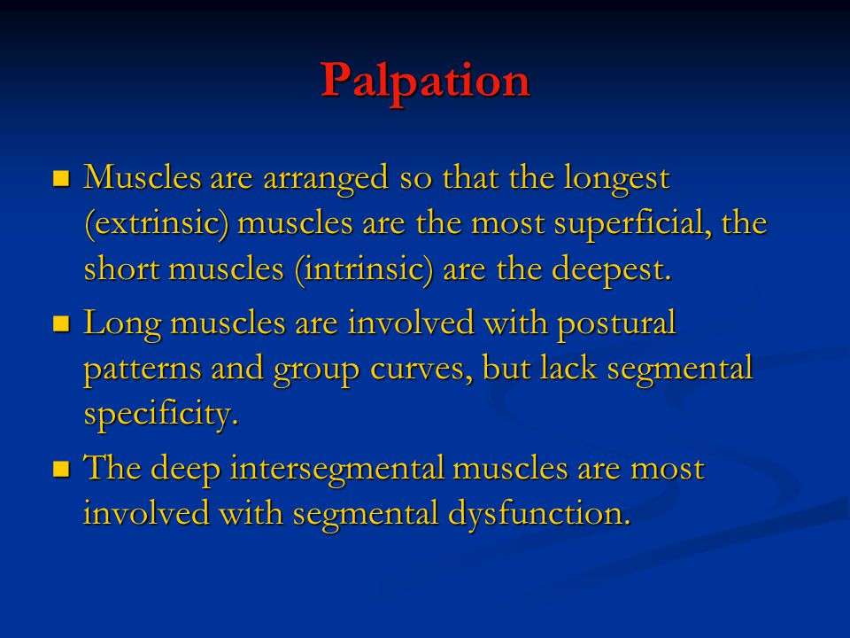 Palpation Muscles are arranged so that the longest (extrinsic) muscles are the most superficial, the short muscles (intrinsic) are the deepest.