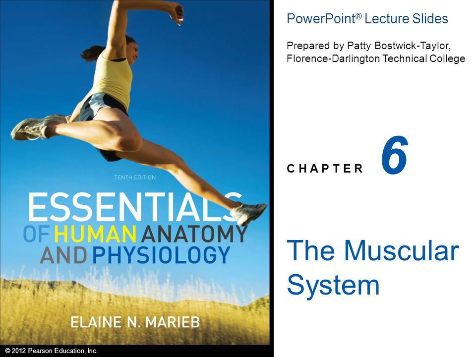 6 The Muscular System