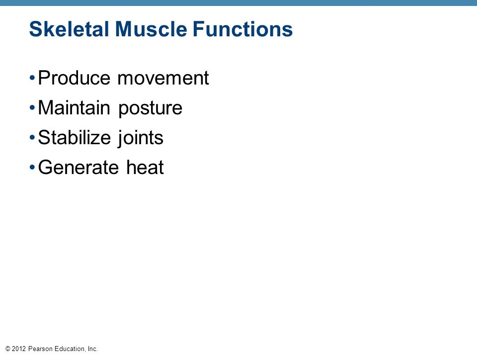 Skeletal Muscle Functions