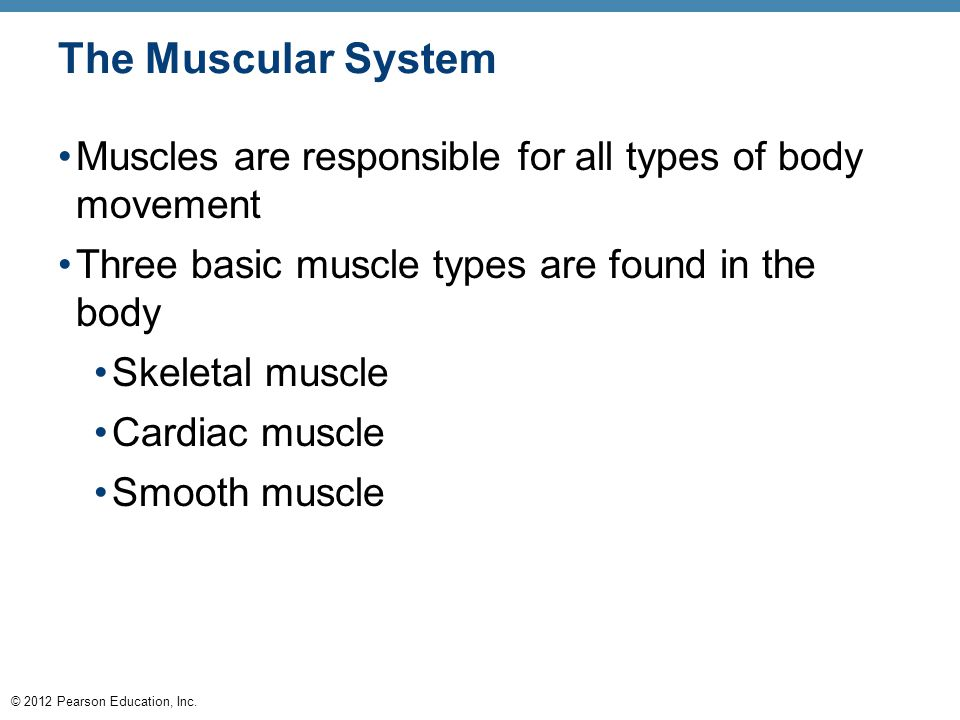 The Muscular System Muscles are responsible for all types of body movement. Three basic muscle types are found in the body.