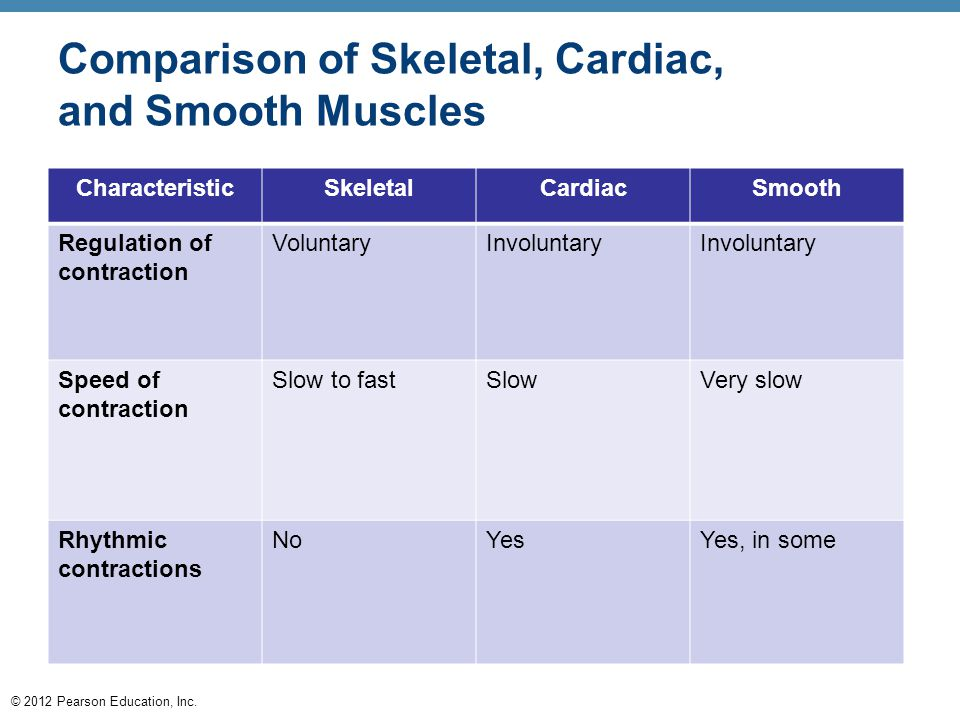 Comparison of Skeletal, Cardiac, and Smooth Muscles