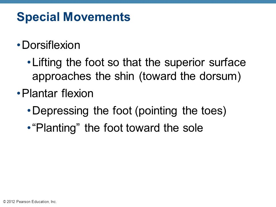 Special Movements Dorsiflexion