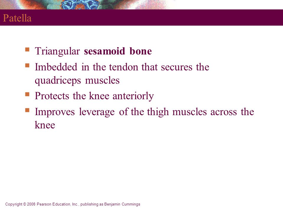 Triangular sesamoid bone
