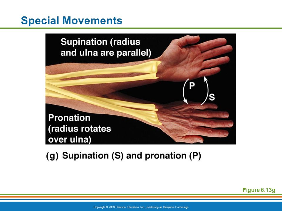 Special Movements Figure 6.13g