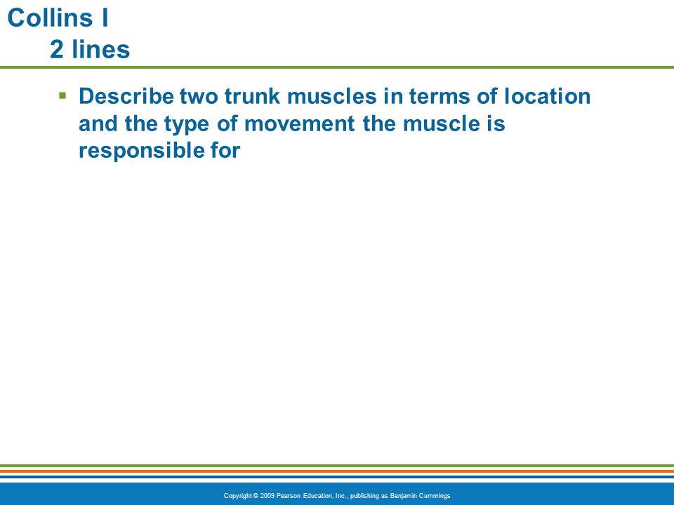 Collins I 2 lines Describe two trunk muscles in terms of location and the type of movement the muscle is responsible for.