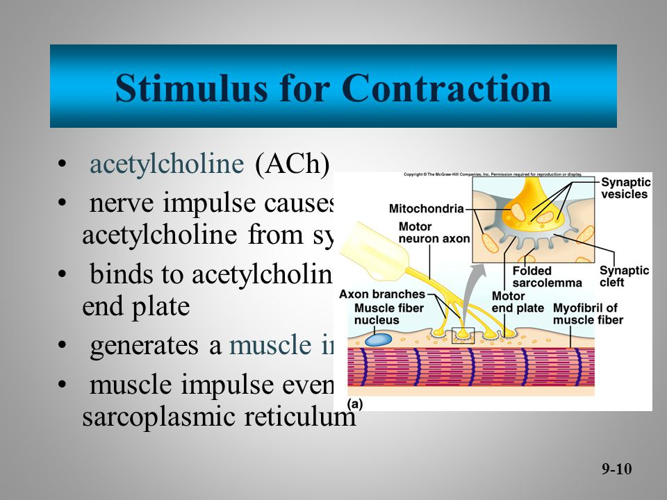 Stimulus for Contraction