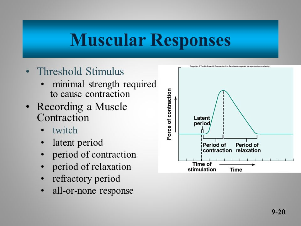 Muscular Responses Threshold Stimulus Recording a Muscle Contraction