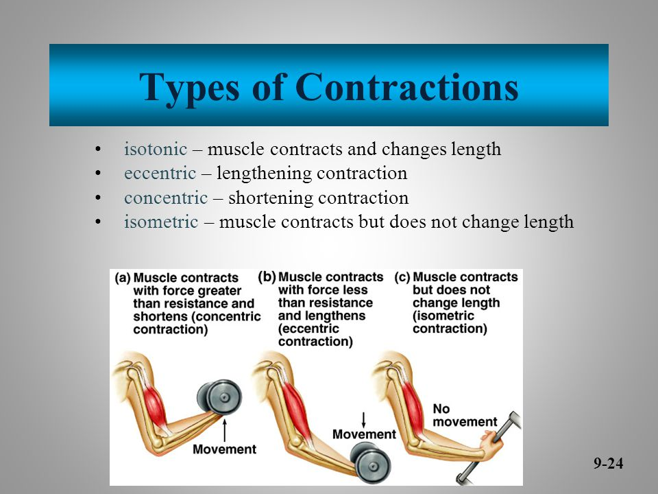 Types of Contractions isotonic – muscle contracts and changes length