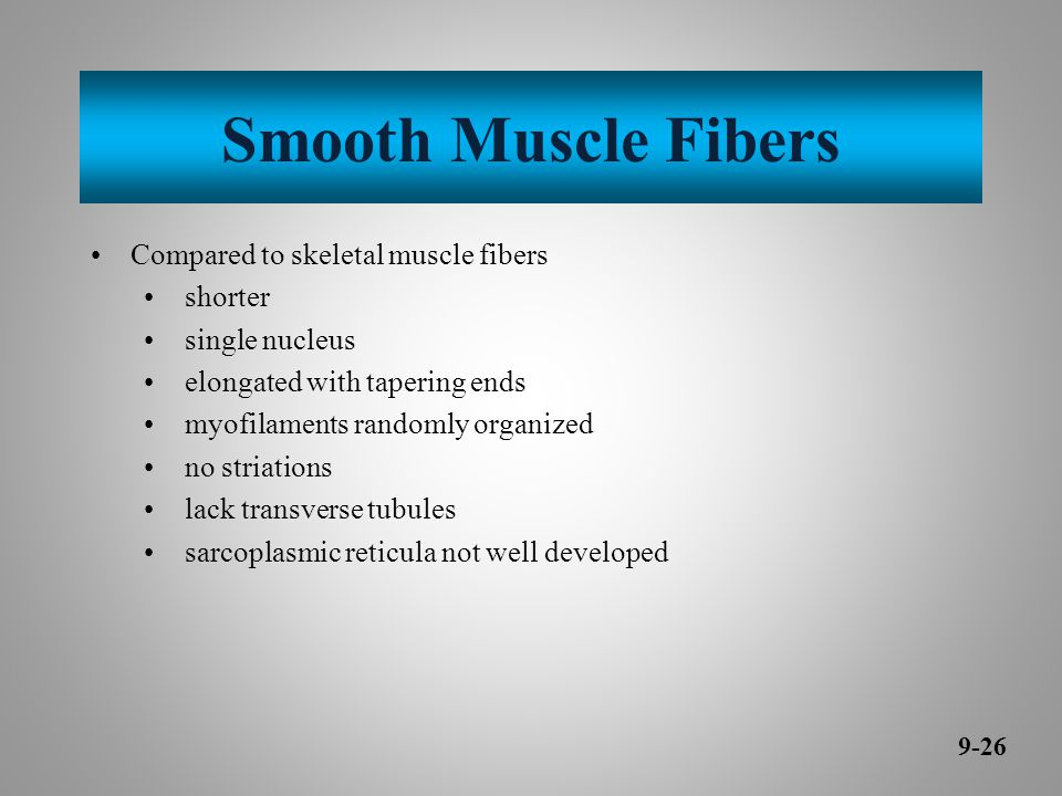 Smooth Muscle Fibers Compared to skeletal muscle fibers shorter