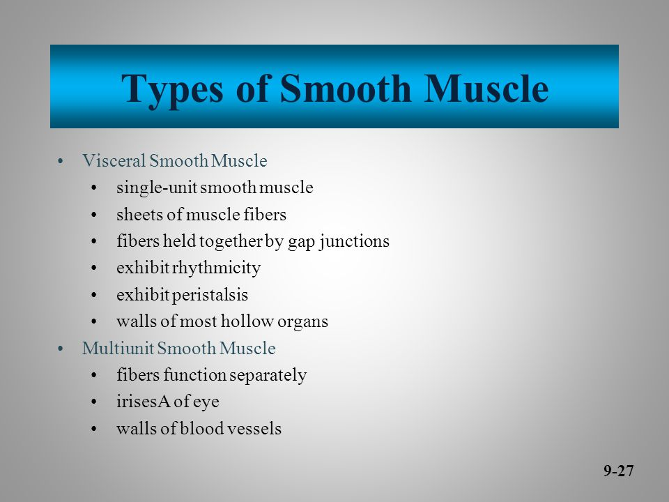 Types of Smooth Muscle Visceral Smooth Muscle