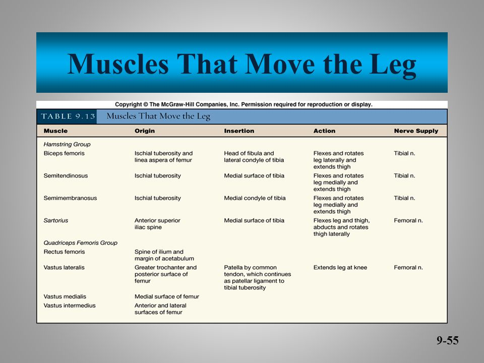 Muscles That Move the Leg