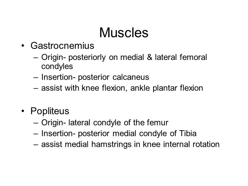 Muscles Gastrocnemius Popliteus