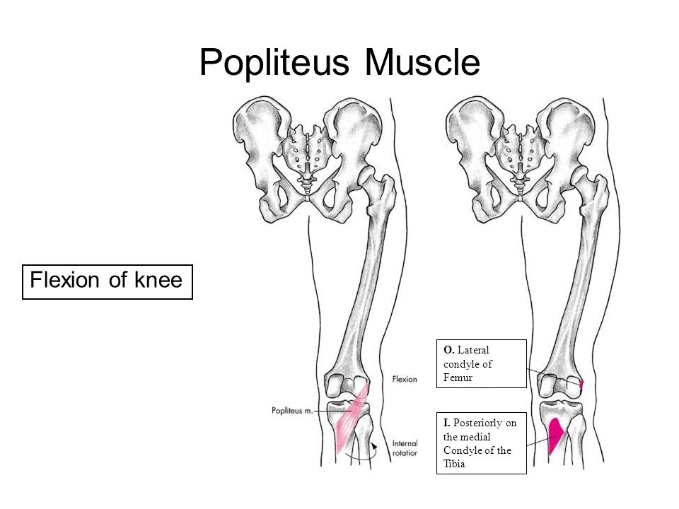 Popliteus Muscle Flexion of knee 21 O. Lateral condyle of Femur