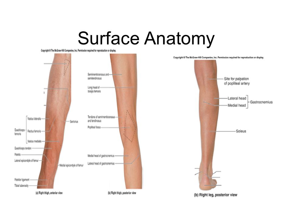 Human body surface anatomy