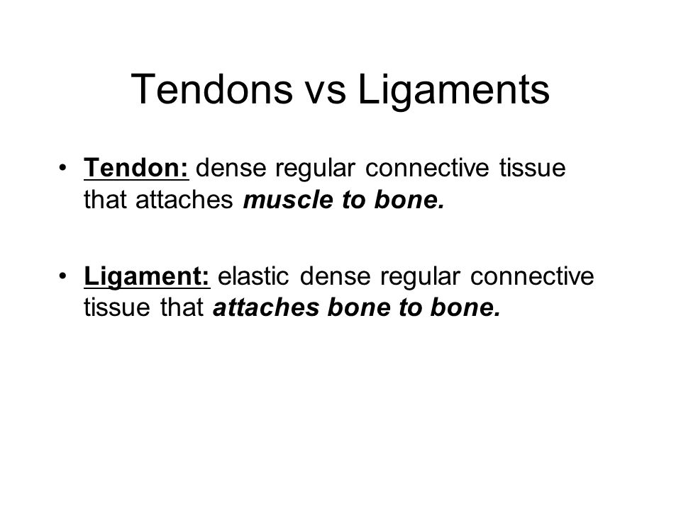 Tendons vs Ligaments Tendon: dense regular connective tissue that attaches muscle to bone.