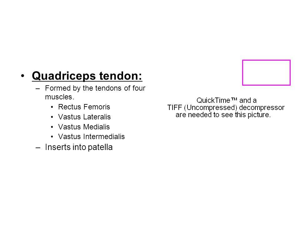 Quadriceps tendon: Inserts into patella