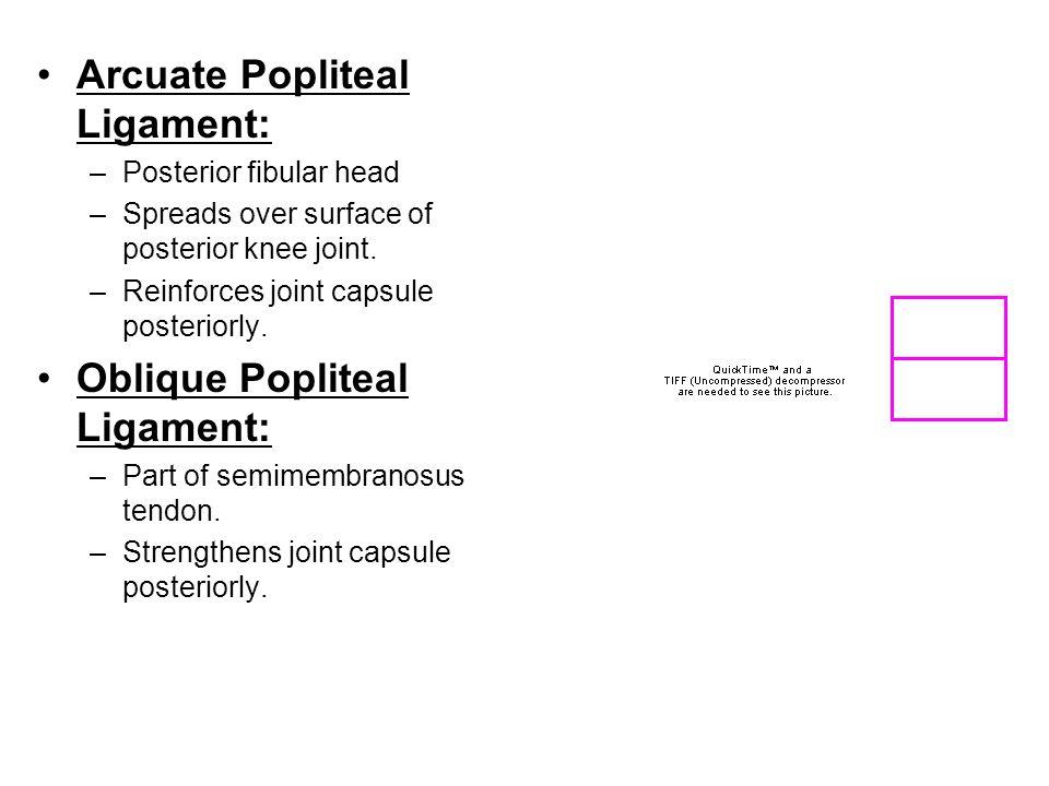 Arcuate Popliteal Ligament: