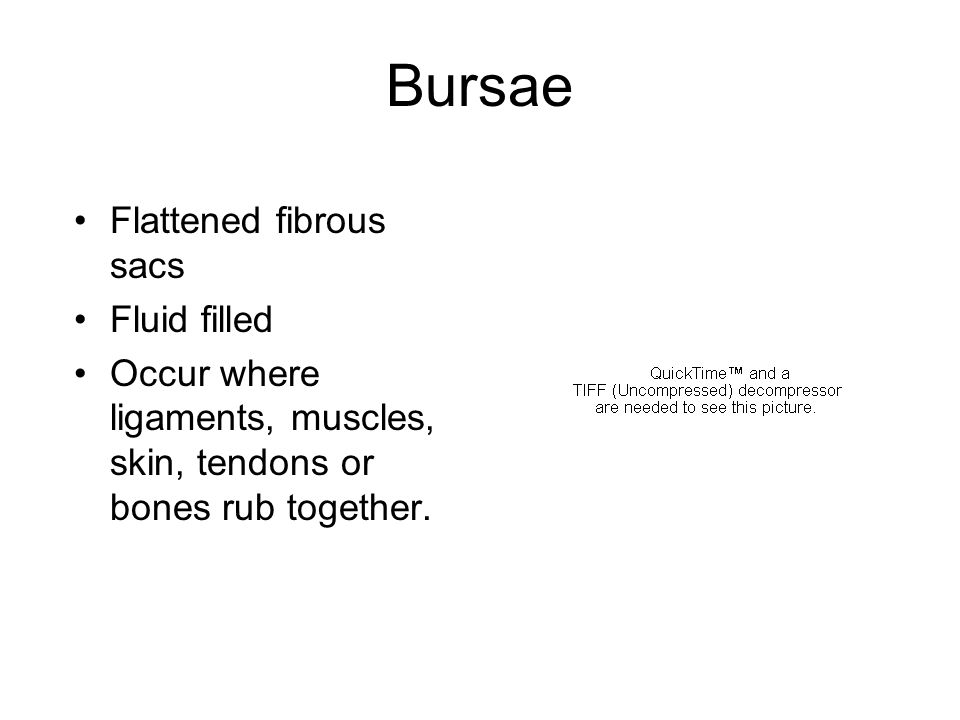 Bursae Flattened fibrous sacs Fluid filled