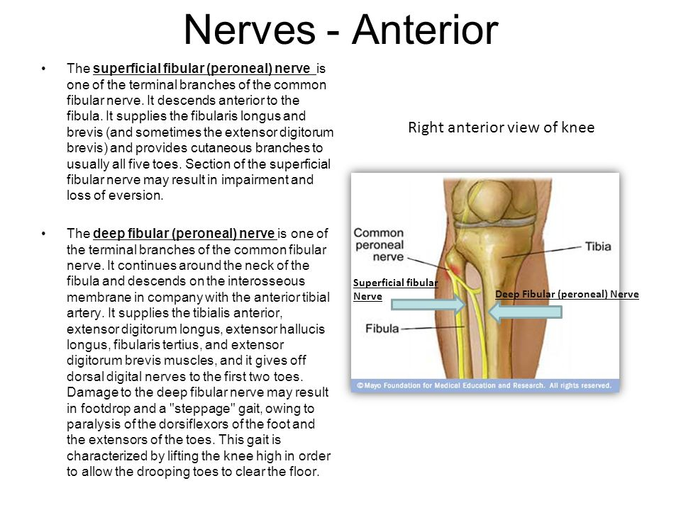Right anterior view of knee