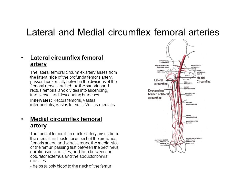 Lateral and Medial circumflex femoral arteries