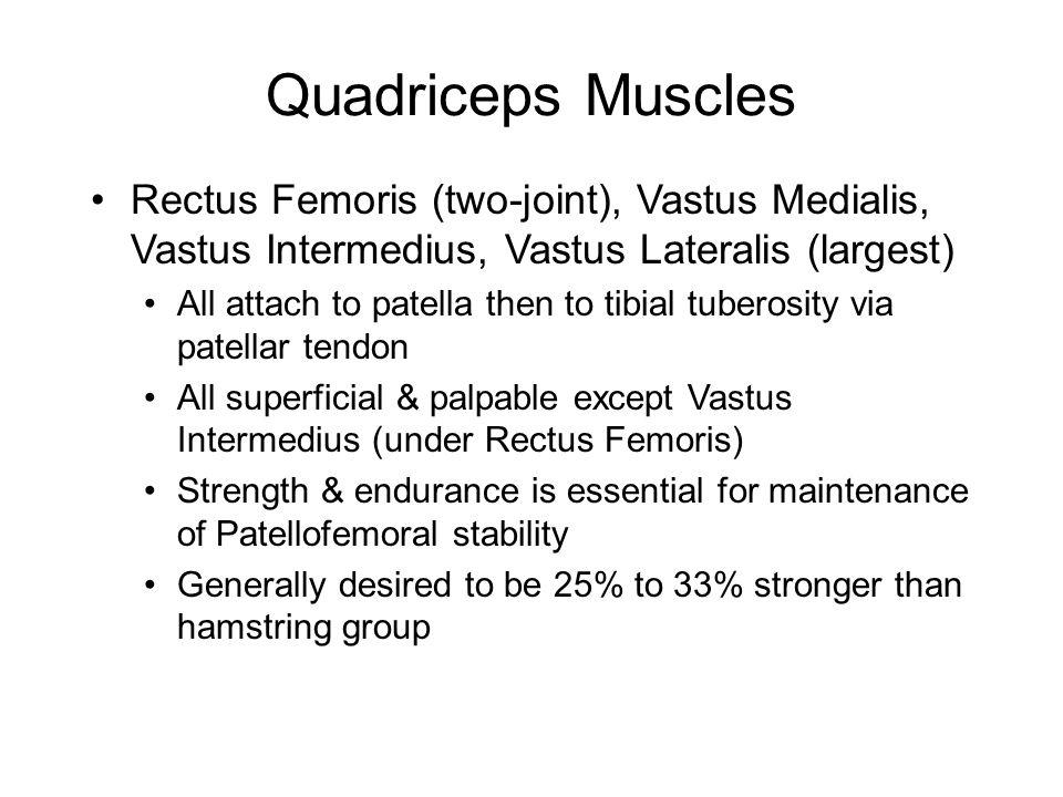 Quadriceps Muscles Rectus Femoris (two-joint), Vastus Medialis, Vastus Intermedius, Vastus Lateralis (largest)