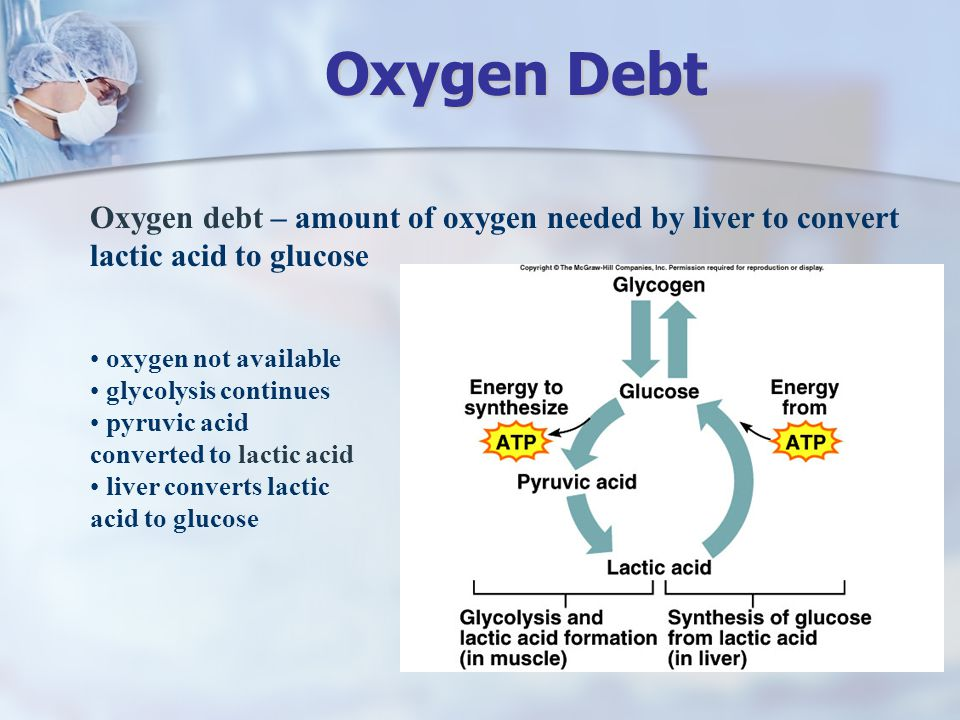 Oxygen Debt Oxygen debt – amount of oxygen needed by liver to convert lactic acid to glucose. oxygen not available.