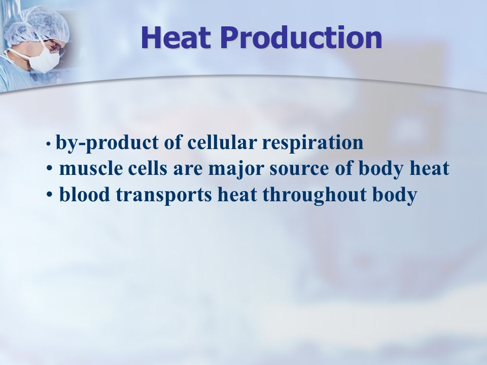 Heat Production muscle cells are major source of body heat