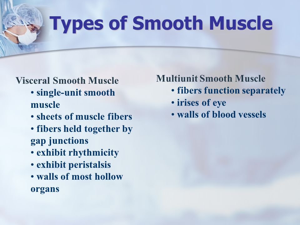 Types of Smooth Muscle Multiunit Smooth Muscle Visceral Smooth Muscle