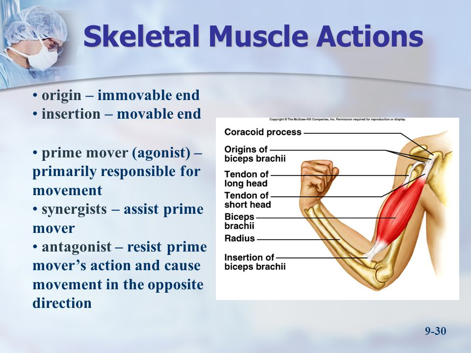 Skeletal Muscle Actions