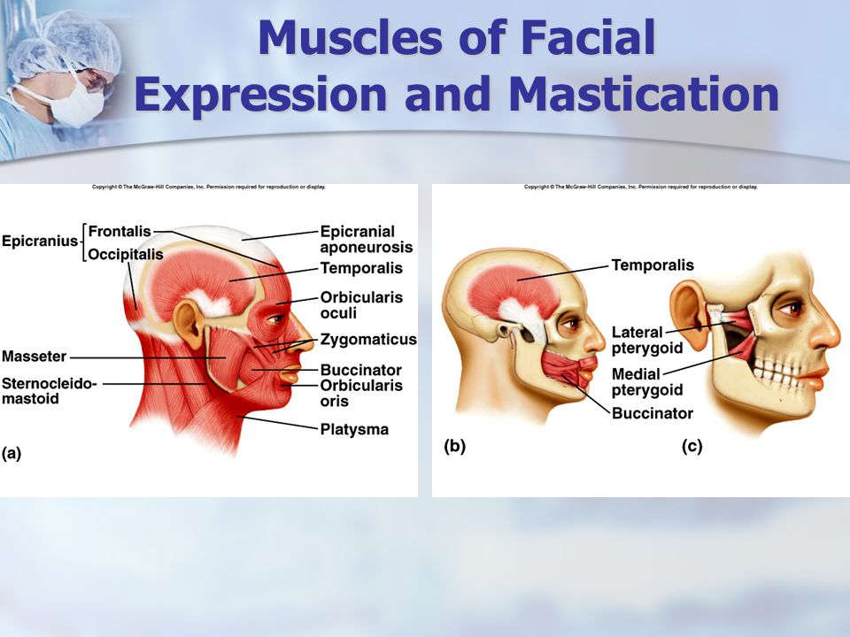 Muscles of Facial Expression and Mastication